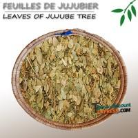 Leaves of jujube tree
