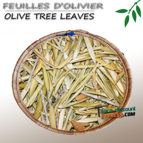 Olive tree leaves