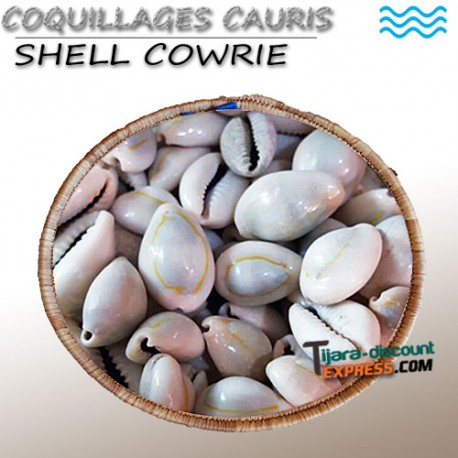 Shell cowrie