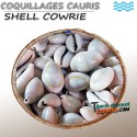 Coquillages cauris